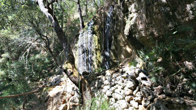 Der Wald im La Reserva