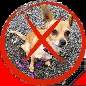Mallorcatalks Hunde nicht erlaubt