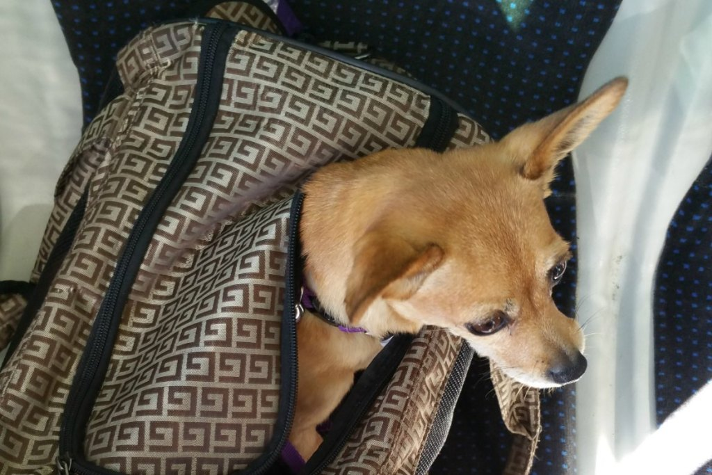 Entspannt Fliegen mit Hund