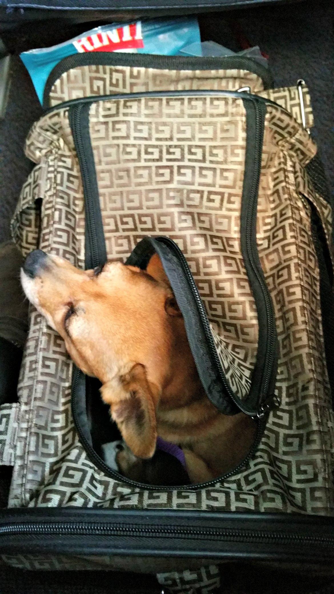 Bus fahren in Palma und Umgebung - Hunde