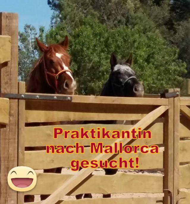 Pferdezüchterin sucht Praktikanten