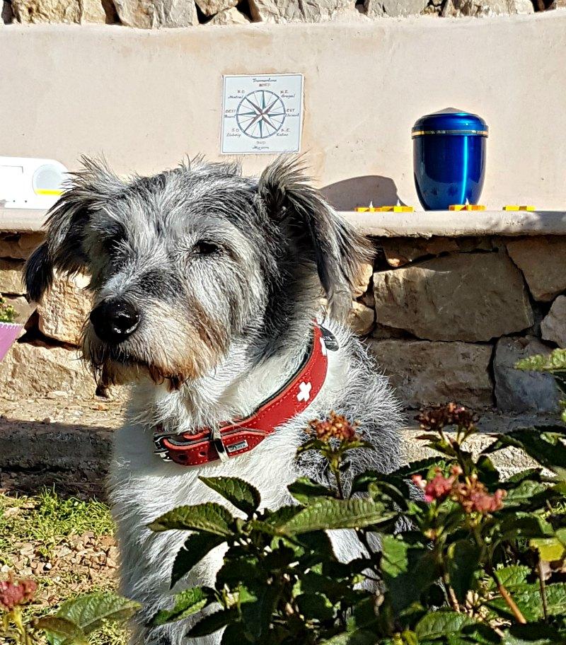 Sterben auf Mallorca - Urne im Garten