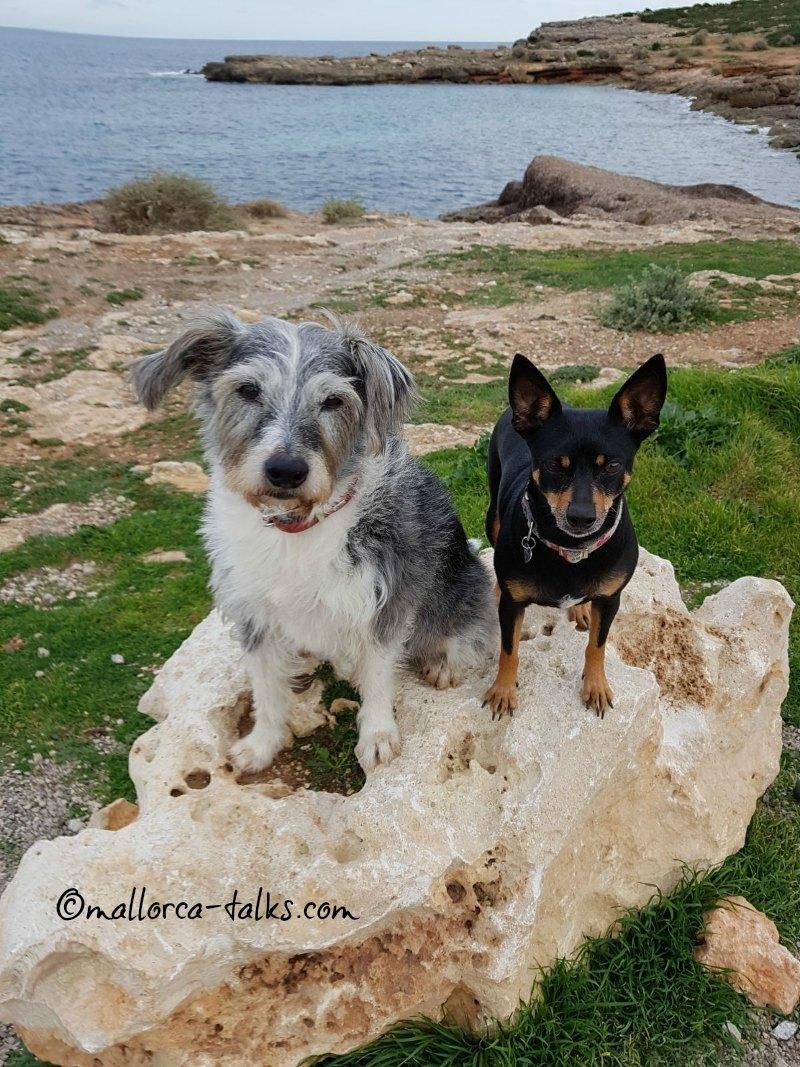 S´Algar Hundestrand Porto Colom