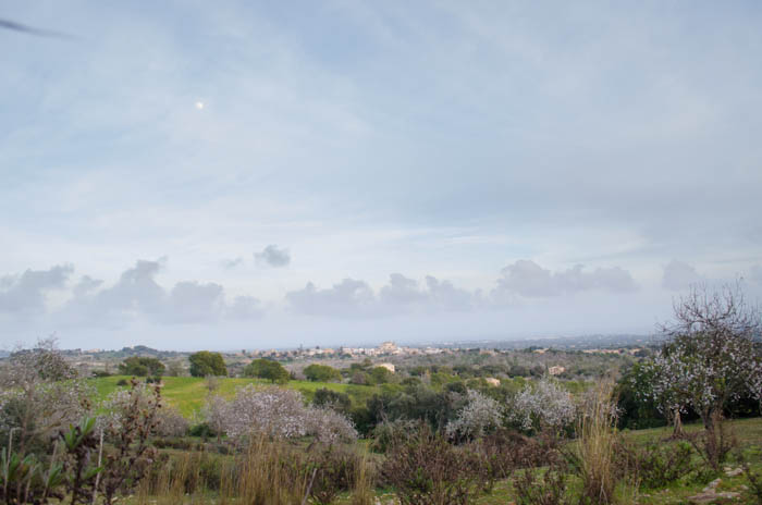 Mandelfelder auf Mallorca