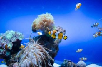 Palma Aquarium Mallorca für Kinder