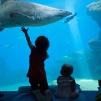 Umgeben von Meer: Palma Aquarium