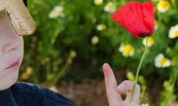 Weltbuchtag-Dia-de-Sant-Jordi (4 von 4)
