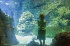 aquarium-in-colonia-sant-jordi (2 von 12)