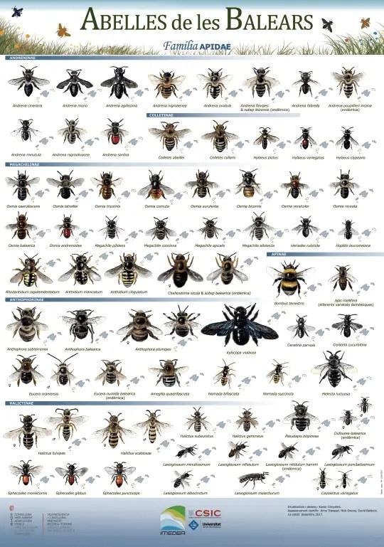 Bienen auf Mallorca