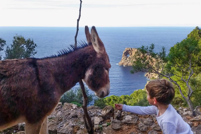 Esel bei Sa Foradada
