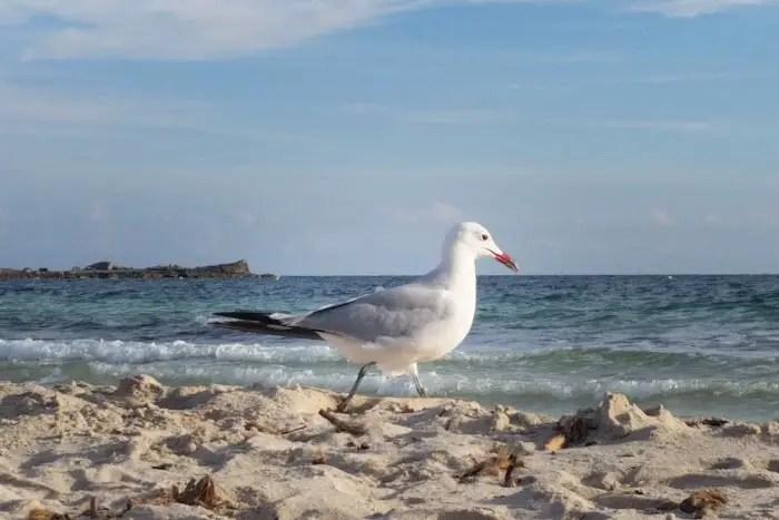 Tourismus Krise auf Mallorca