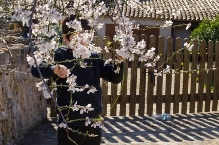 Mandelblüte im Februar auf Mallorca