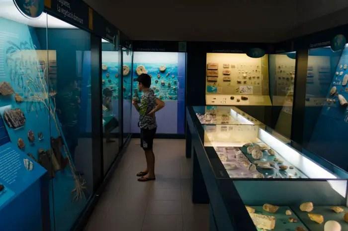 Balearisches Naturkundemuseum