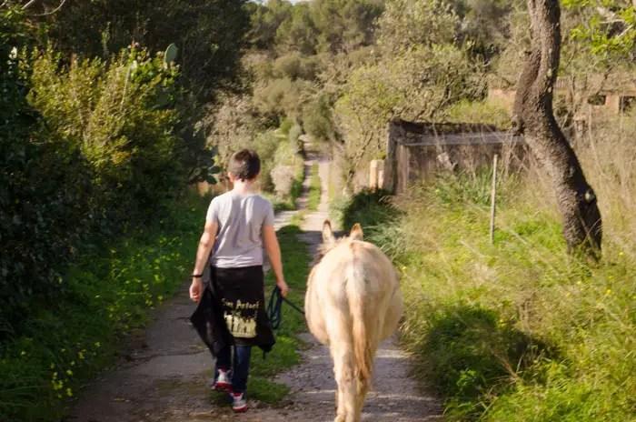 Esel Wanderung auf Mallorca