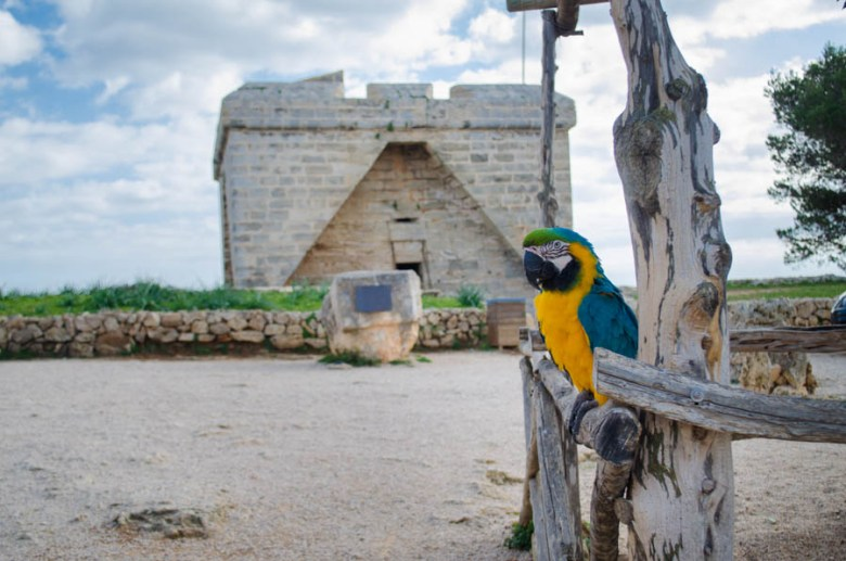 Paco der Papagei