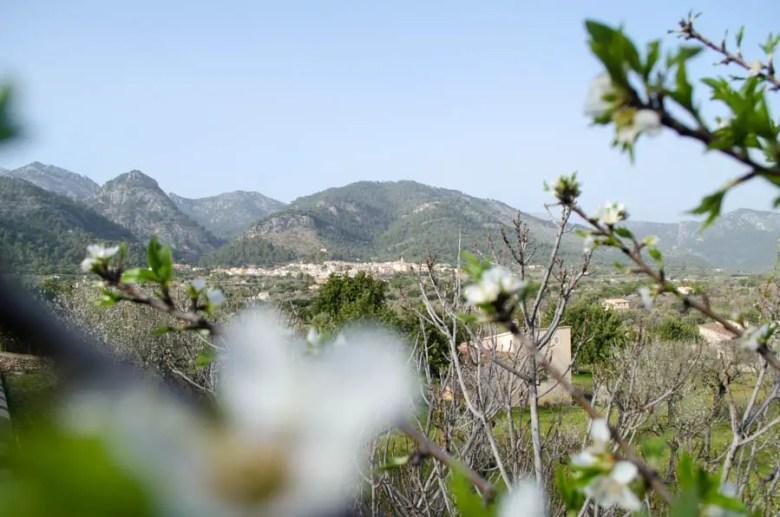 Von Caimari nach Binibona zur Mandelblüte