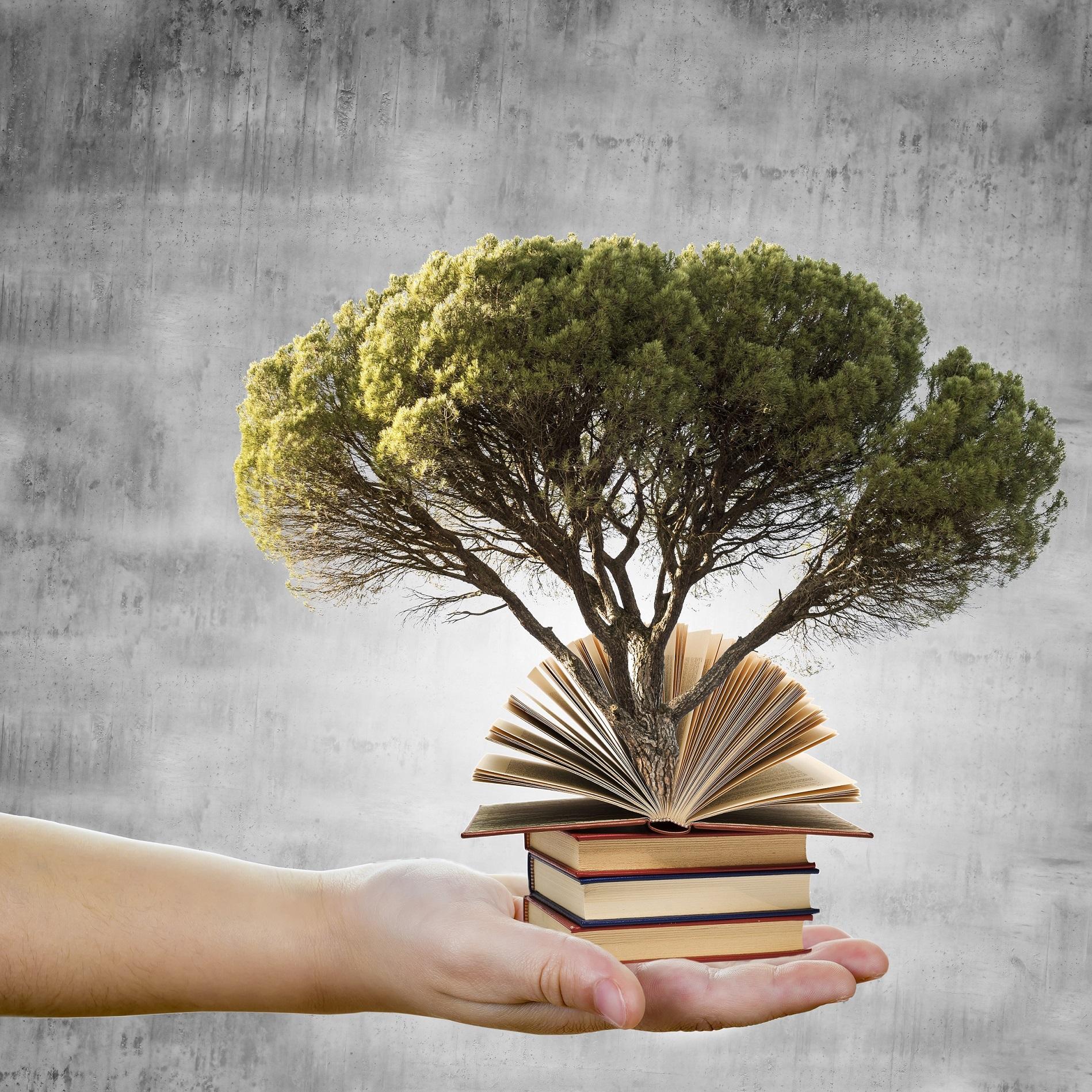 Conceptos de educacin y respeto al medio ambiente