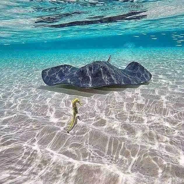 10 posti per fare snorkeling a MALTA