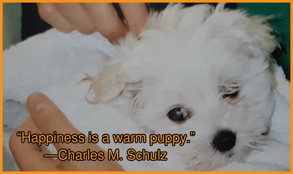 Maltese Dogs Quotes To Make You Smile