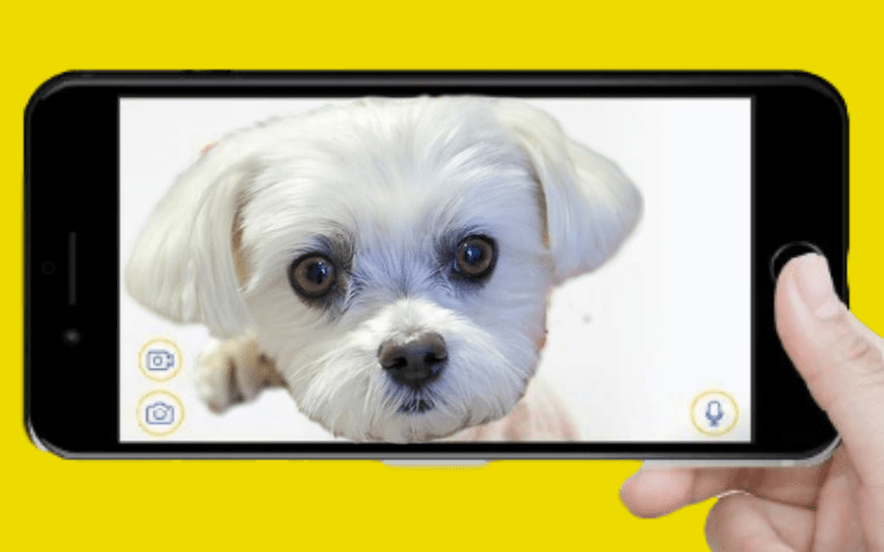 Why To Buy The Best Dog Camera For Your Maltese