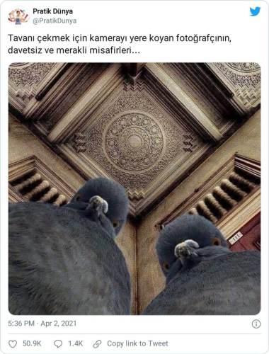 davetsiz meraklı misafir kuşlar