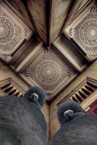 güvercin fotoğrafçı