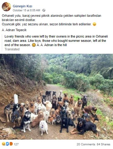 sahipleri tarafından bırakılmış köpekler
