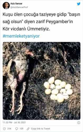 yumurtalarını bırakmayan kuş