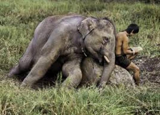 Mame arte STEVE McCURRY: ANIMALS Chiang Mai