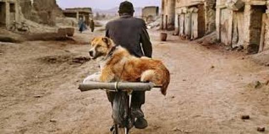 Mame arte STEVE McCURRY: ANIMALS Kabul