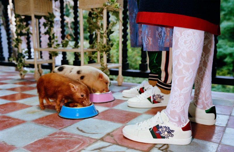 Gucci celebra l'Anno del Maiale. Sneakers Ace