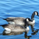 Canadian Facts – Nature and Wildlife in Canada