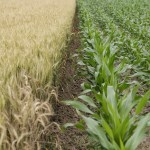 GMO vs ORGANIC – Please Don't Tell Me What to Eat