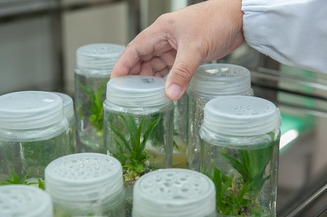 GMO vs Organic