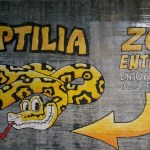 Facing Fears at Reptilia Zoo – Grade 1 Class Trip