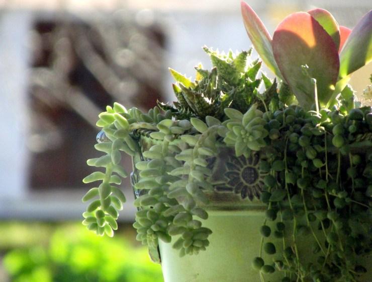 potted cactus 17929 1920 - 15 ROŚLIN NAJLEPIEJ OCZYSZCZAJĄCYCH POWIETRZE W DOMU