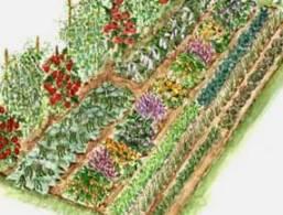 vegetable_garden2