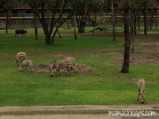 Disney World Animal Kingdom Lodge Kidani Village Deluxe
