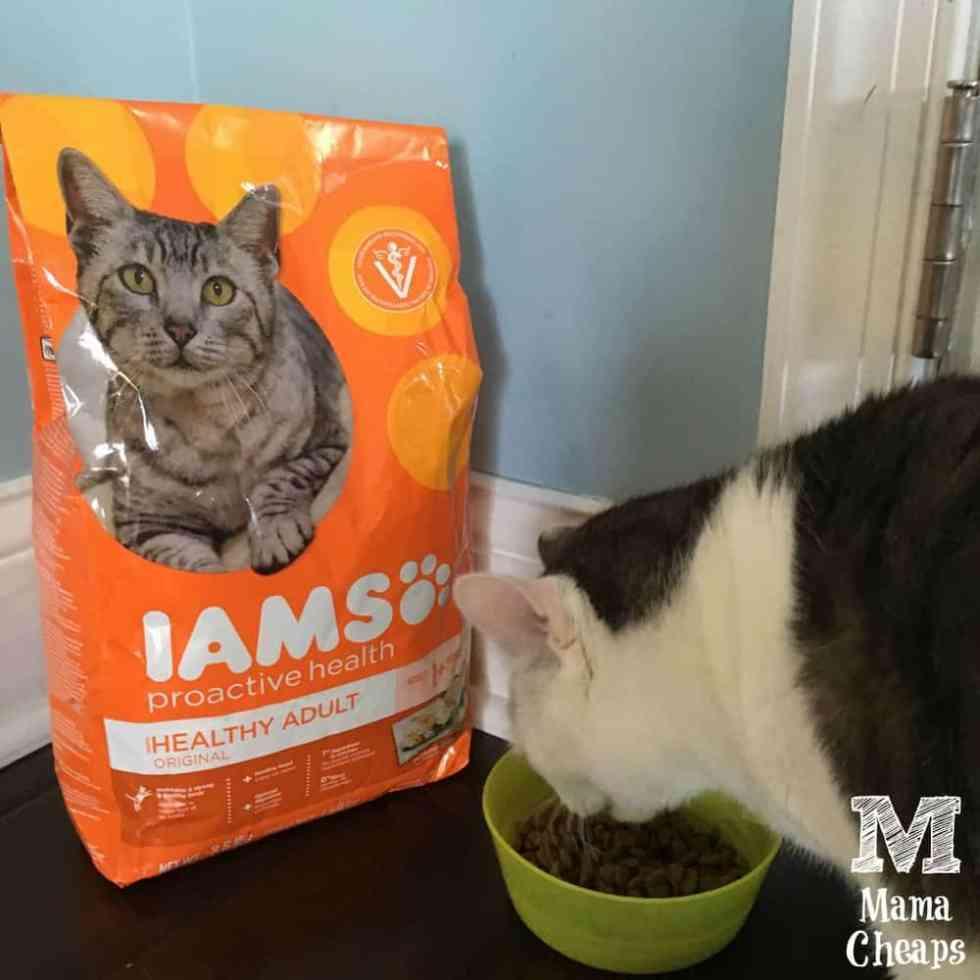 Cat Eating IAMS Food