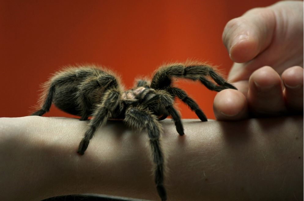 Is It Time You Faced Your Fears? Common Phobias Revealed