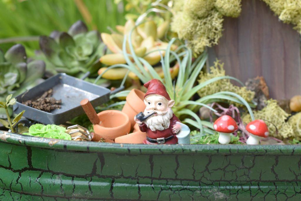 Fairy Garden Succulents on Budget