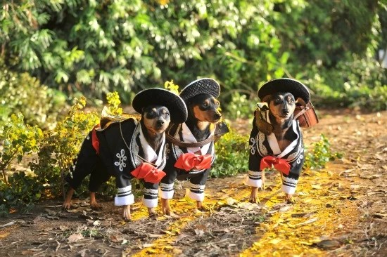 Celebrate Family with Disney's Beverly Hills Chihuahua 3 and Find out How to Win a Luxurious Vacation
