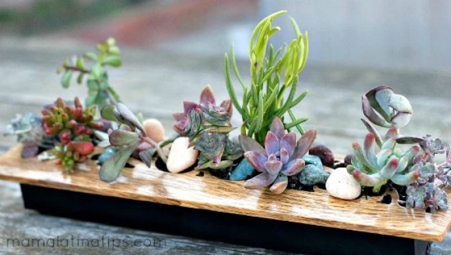 a centerpiece of succulents on a wooden table