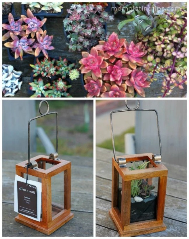 A collage showing how to make a centerpiece of succulents using a lantern