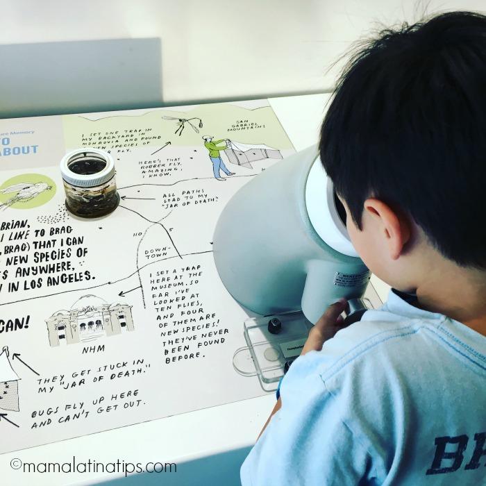kid watching through a microscope at the Natural History Museum LA - mamalatinatips.com