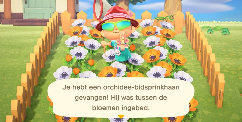animal crossing new horizons populair waarom