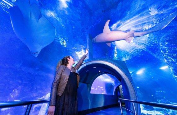 Discover Sharklife at SEA LIFE Melbourne Aquarium