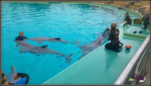 Planete-Sauvage-Rencontre-Dauphins