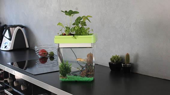 Aquarium Ozarium, l'aquarium qui fait pousser des plantes!