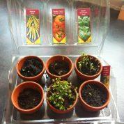 L'atelier jardinage de bébé avec Radis et Capucine !